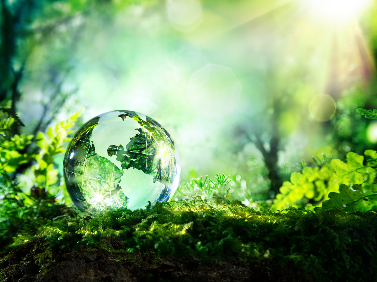 crystal globe on moss in a forest – environment concept